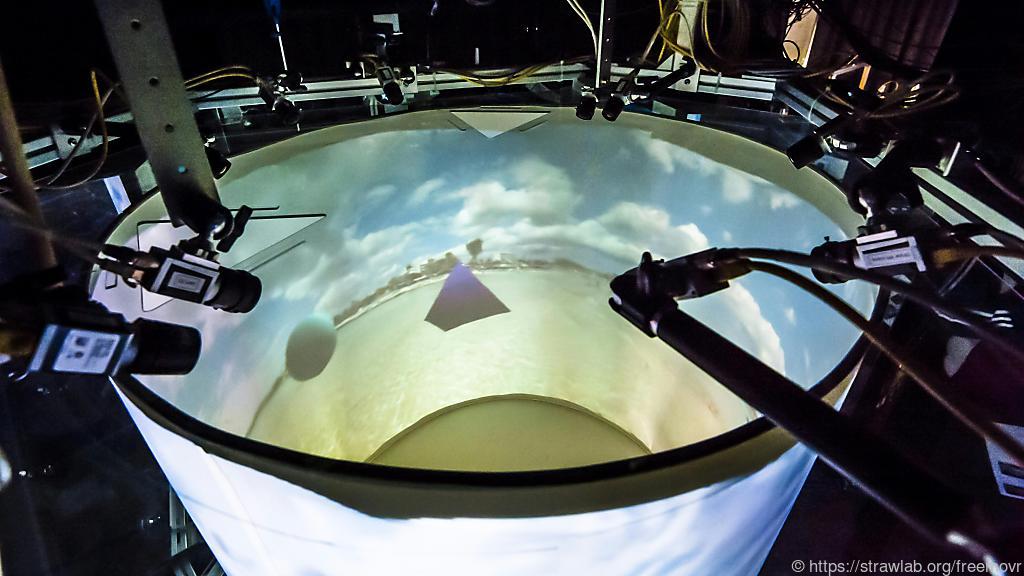 virtual reality forscher bauen holodeck f r maus und fisch. Black Bedroom Furniture Sets. Home Design Ideas