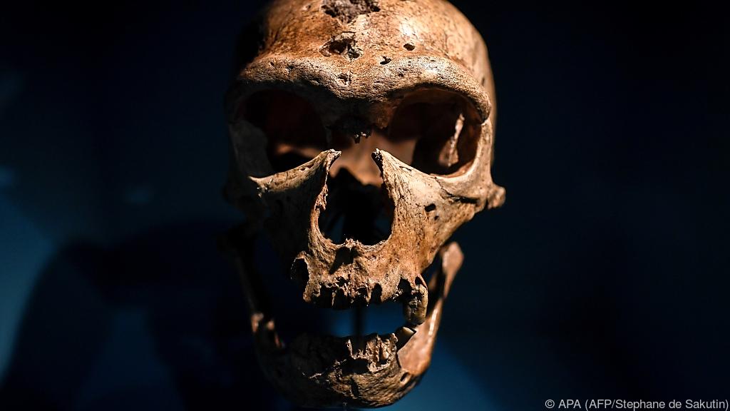 Neandertaler konnten tief atmen - aber weniger zubeißen als gedacht