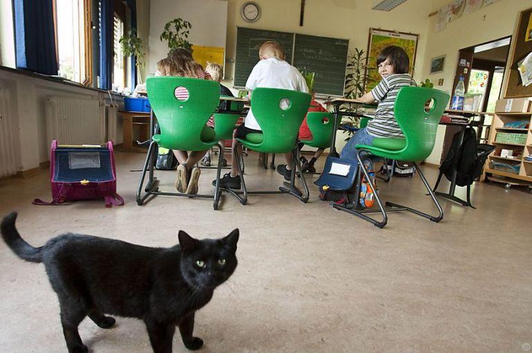 Rechnungshof urgiert präzisere Regeln für Schulschließungen