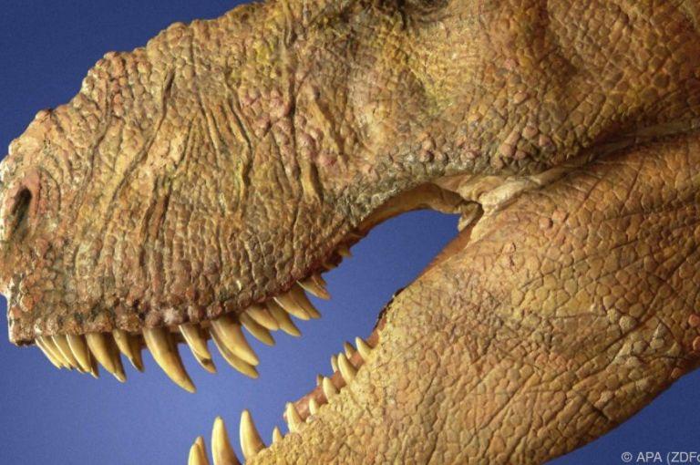 Studie: Säugetiere wurden nach Aussterben der Dinosaurier tagaktiv
