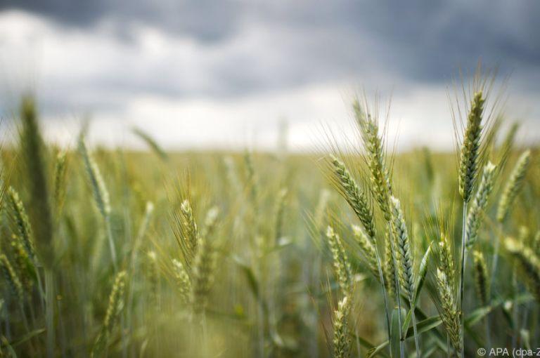 Forscher: Bio kann die ganze Welt ernähren