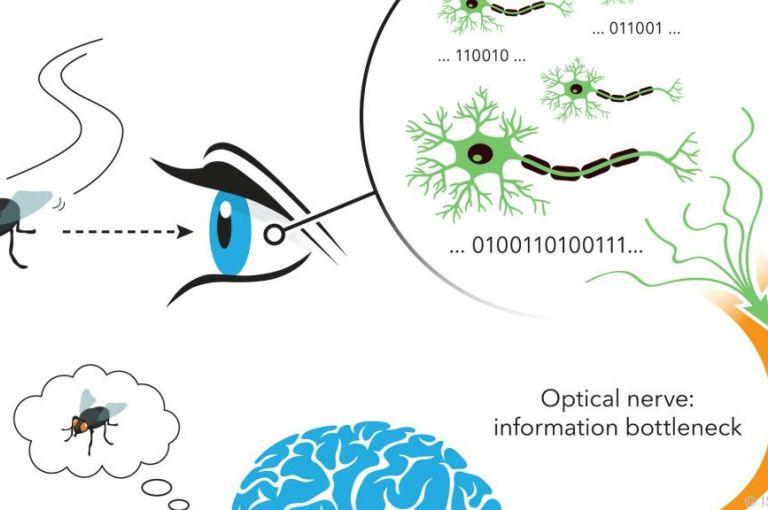 """IST-Austria-Forscher stellten Neuro-""""Weltformel"""" auf"""