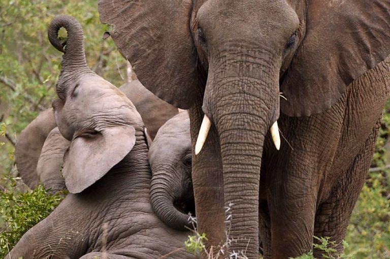 Studie: Bewaffnete Konflikte dezimieren Wildtiere in Afrika