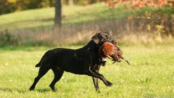Sieben Prozent von 80 untersuchten Hunden waren infiziert