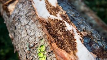 Steigende Temperaturen, Stürme und Borkenkäfer setzen den Bäumen zu