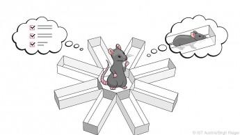 Neuronen-Aktivität zeigt, wohin sich ein Tier als nächstes bewegt